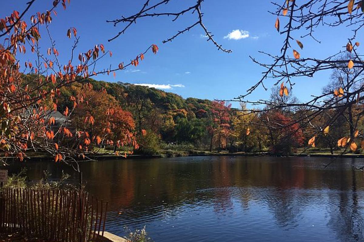 Autumn in Roslyn